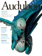 Audubon November Issue: Spix Macaw